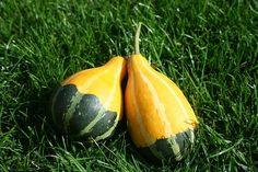 Kterou dýni musíte vařit a která se jí za syrova? Pear, Watermelon, Pumpkin, Fruit, Vegetables, Food, Pumpkins, Essen, Vegetable Recipes