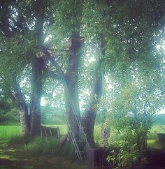 Summer My Photos, Trees, Summer, Home Decor Trees, Wood, Summer Time, Plant
