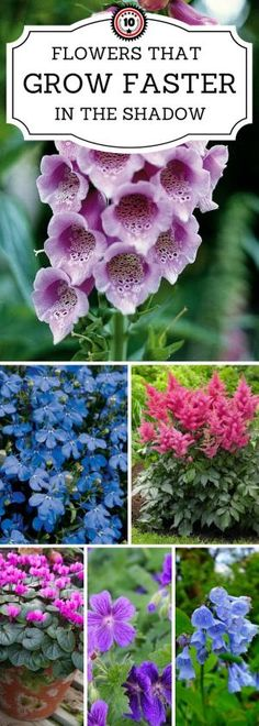 Top 10 Beautiful Shade-Loving Flowers 10 Flowers That Grow Faster In The Shadow Check out these 10 flowers that love full or partial shade blooming Perennials maintenance Perennials full sun ideas Perennial Flowering Plants, Shade Garden Plants, Garden Shrubs, Lawn And Garden, Spring Garden, Garden Paths, House Plants, Shade Loving Flowers, Types Of Flowers