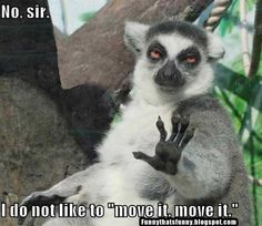 Funny That's Funny!!!: Move It, Move It - Uhhh... No! #animals #funny #amwatching