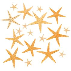 Add an organic look to your luau decorations with this Natural Starfish Assortment. Give your beach or tropical-themed party an authentic ambiance! Use these underwater wonders to decorate your Hawaiian party tables! (30 pcs. per unit) 1 - 3 Natural starfish, size and color may vary. Assortment may vary.