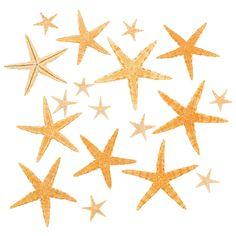 Natural+Starfish+Ass...