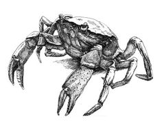 crab tattoo - Google Search