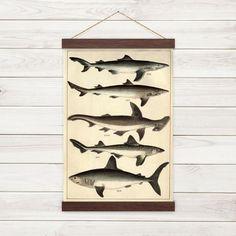 Shark Poster - Vintage Illustration - Reproduction Canvas Print w/ Wooden Poster Hanger - Canvas Poster, Poster Prints, Wood Wax, Vintage Butterfly, Jute Twine, Art Background, Wooden Walls, Vintage Posters, Images