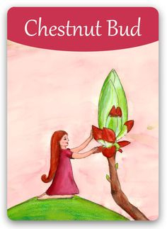 """Bach Flower: Chestnut Bud - """"Look closer! Chestnut Bud, Bach Flowers, The Ancient One, Flowers Online, Oracle Cards, Illustrations, Flower Cards, Flower Power, Fantasy Art"""