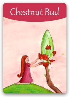 Bachblüten-Karten, mit Liebe illustriert von Susanne Winberg | Bachblüten-Orakel-Karten