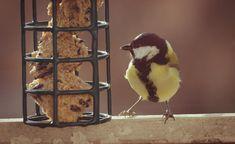 Das fröhliche Vogelgezwitscher in unseren Gärten möchten wir nicht missen – doch viele Vögel sind bedroht und brauchen unsere Unterstützung. Wie jeder Gartenbesitzer mit der Winterfütterung und anderen Maßnahmen dazu beitragen kann, unsere Singvogelarten zu erhalten, erklärt der Experte Prof. Dr. Peter Berthold im Interview.