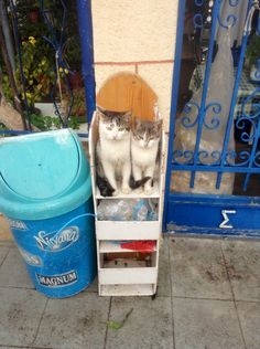 Agistri cats Greek Islands, Athens, Greece, Cats, Gatos, Greek Isles, Kitty, Cat, Athens Greece