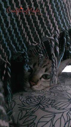#Hide and seek #kiwi #cat #kitty