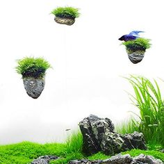 Fish & Aquariums Live Aquarium Plant Java Moss Fern Q To Make One Feel At Ease And Energetic Live Plants Red Tiger Lotus