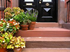 Some nice warm colord for these containers! Front Steps, Landscape Design, Sidewalk, Container, Seasons, Warm, Nice, Garden, Plants