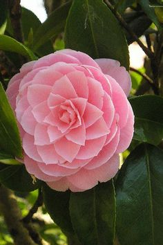 Beautiful Gif, Rose, Flowers, Plants, Pink, Plant, Roses, Royal Icing Flowers, Flower