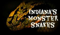 Indiana's 'Monster' Snakes
