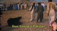 """""""O GRITO DO BICHO"""": Luta entre ursos e cães continuam no Paquistão. Aj..."""