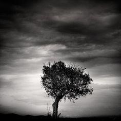 Juste un arbre - Philippe Mougin // P H O T O G R A P H I E S