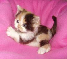 #Cute #little #kitten. . . #catsofinstagram