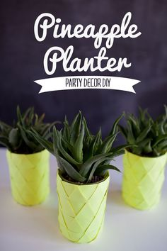 TELL: PINEAPPLE PLANTER