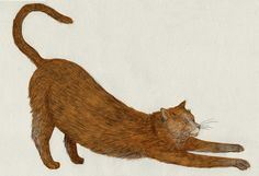 stretchy cat by Lizzy Stewart, via Flickr