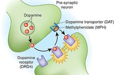 Share Tweet + 1 Mail Dopamine is a key neurotransmitter for motivation, focus and productivity. Learn the symptoms of dopamine deficiency and natural ways ...