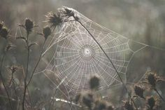 Image result for cobwebs