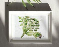 Gin Botanicals: Juniper Plant Watercolour Art Print Limited   Etsy Watercolor Plants, Watercolour Art, Juniper Plant, Spirit Drink, Dolphin Art, Gin, House Warming, Art Prints