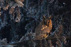 Photo: Mateusz Piesiak (Poland) 2013: 15-17 Years - Winner/ Wildlife Photographer of the Year 2013