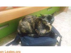 Gatos perdidos  España  Las Palmas - Gran Canaria  Las Palmas G.C. March 11 2018 at 03:43PM   Milu  #PERDIDO #ENCONTRADO  Contacto y Info: https://leales.org/perdidos-o-encontrados/gatos-perdidos/milu_i3724 #Difunde en #LealesOrg un #adopta y sé #acogida para #AdoptaNoCompres O un #SeBusca de #perro o #gatos ℹ Gata perdida por el nombre de Milú en Gran Canaria La isleta zona Manuel becerra número de teléfono de contacto 656615237 (Sergio). Es castrada y mansa. En todos los navegadores…