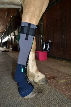 EquiCrown med Ganzes Bein Horse Boots, Horse Tack, Horse Care Tips, Dundee, Equestrian Style, Show Horses, Horse Riding, Rubber Rain Boots, Perfect Fit