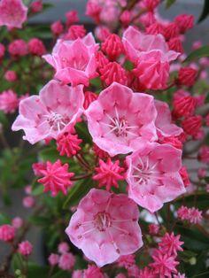 Rózsaszín virágok..