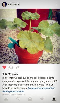 Nunca subestimes el poder del Kit del Patio Cordobes ... Jajaja Nuestra amiga Rocío de Jaén no lo hizo y mirad que simpática fotografía nos manda a través de nuestro #Instagram