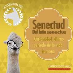 Spanish Vocabulary, Teaching Spanish, Learn A New Language, Llamas, Fractions, Book Quotes, English Language, Poems, Letters