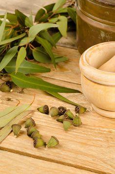 Our Eucalyptus Oil i