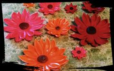 Check out this item in my Etsy shop https://www.etsy.com/listing/192957275/24-edible-daisydaisies-variety-sizes-any