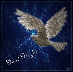 Good Night imagem 7