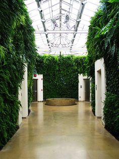 Green Wall at Longwood