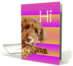 28 best hi just to say hello images on pinterest greeting cards adorable miniature poodle hi greeting card greeting card universe by betsy bush say hi m4hsunfo