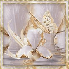 White and Gold Butterfly. Click on photo 2 or 3 times.