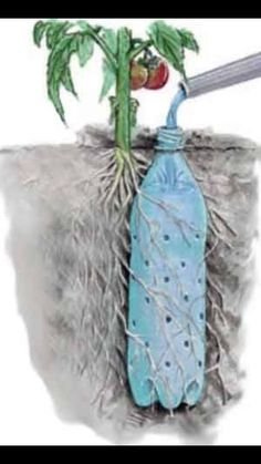 Bottle Drip Feeder for Plants - Water Plants with a Soda Bottle Underground Self Watering Recycled Bottle System - Potted Vegetable Garden Lif.Underground Self Watering Recycled Bottle System - Potted Vegetable Garden Lif. Water Plants, Garden Plants, Herb Garden, Indoor Plants, Gutter Garden, Planting Plants, Flowers Garden, Potted Tomato Plants, Outdoor Potted Plants