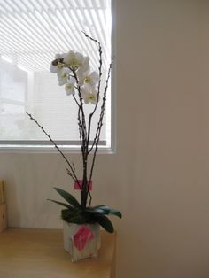 An orchid plant is a great decor for your office and home.It needs one ice cube per week and lasts up to weeks. Orchid Plants, Orchids, Orchid Arrangements, 8 Weeks, Plant Design, Cube, Glass Vase, Flowers, Home Decor