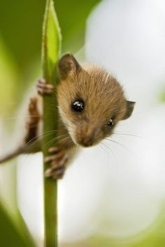 Stewart Little Photo by Nikkhil Shirodkar — National Geographic Your Shot - Animals Wild Life Animals And Pets, Baby Animals, Funny Animals, Cute Animals, Nature Animals, Wild Animals, Cute Creatures, Beautiful Creatures, Animals Beautiful