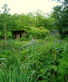 Early june looking down to the hen house by hardworkinghippy, via Flickr