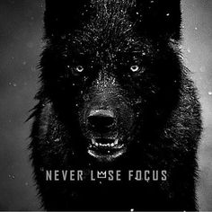 Famous and Top Wolves Quotes and The best Wolf Sayings and Quotes Image Collection. Wisdom Quotes, True Quotes, Great Quotes, Quotes To Live By, Motivational Quotes, Funny Quotes, Inspirational Quotes, Super Quotes, Lone Wolf Quotes