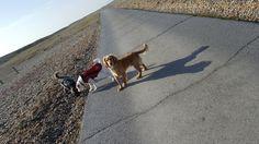 Rye dog walking   Www.Hastingspetcare.Co.Uk