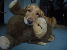 """Photo of Tucker and his best friend, Teddy, by YouNews contributor """"bpmetzelaar."""""""