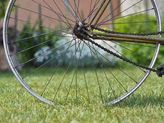 bicycles, garden, flower