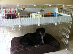 Pink Guinea Pig Cages | New beginnings for little miracles: the littlest tornado survivors ...
