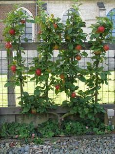 leifruit-Natuurlijk tuinieren