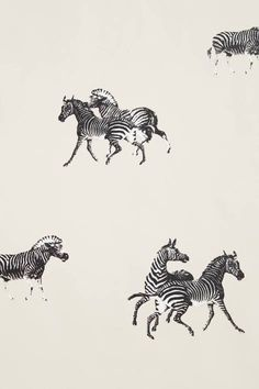 Cavorting Zebras Wallpaper