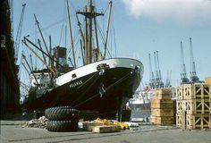 Helenus. Acknowledgment Gwyn Jones. Merchant Navy, Merchant Marine, Liverpool Docks, Good Old, Family History, Boats, Sailing, Ship, Inspiration