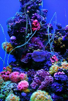 aquarium by Rachel Cynthia Photography, via Flickr